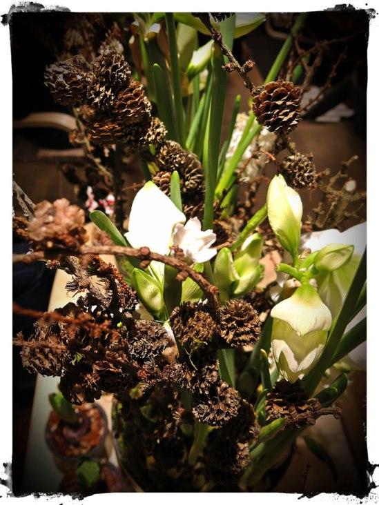 Vit amaryllis och kottar