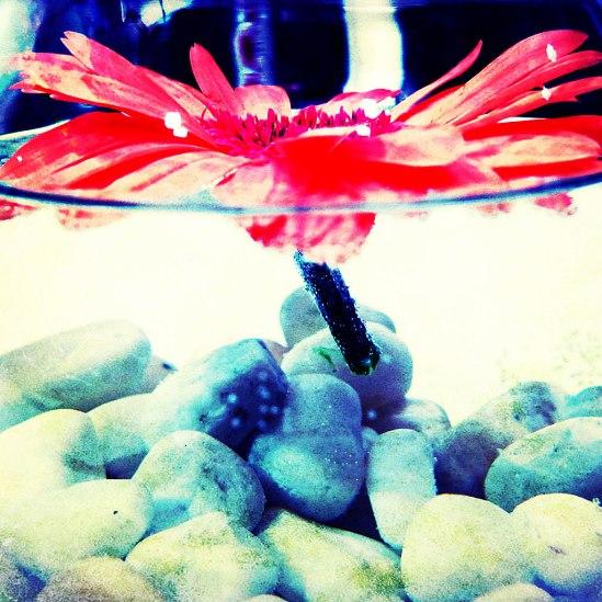 Gerbera float / © LEX 2013
