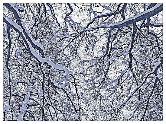 En vintrig promenad på Djurgården