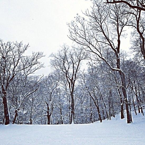Träd-i-snö-2