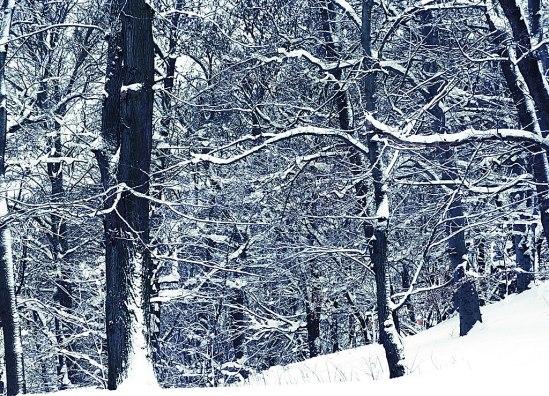 Träd-i-snö-3