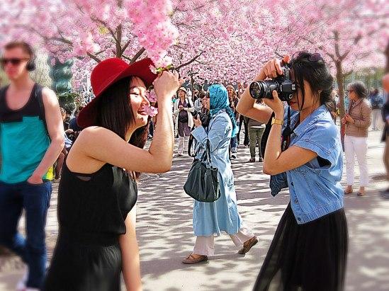 Sakura5 / © LEX 2013