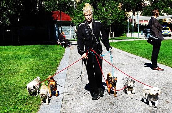 Dogwalking / © LEX 2013